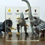 Cerchi un'idea regalo originale, affascinante e che sia educativa e che sappia coinvolgere anche i ragazzi più recalcitranti? Questa collezione di fossili di dinosauro potrebbe essere il regalo che cercavi.