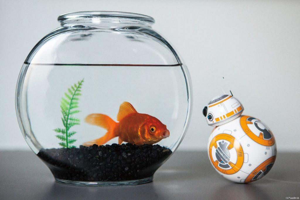 Direttamente dal mondo di Star Wars ecco un piccolo, vero, divertentissimo BB-8! Scopriamo insieme cosa sa fare questa deliziosa creatura!