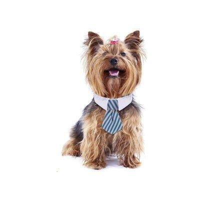 Con la crisi economica, ogni membro della tua famiglia deve contribuire a pagare le bollette - incluso il tuo cane. Prepara il look del tuo cane affinché sia pronto ad una carriera rampante nel mondo degli affari!
